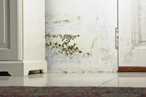 Mold testing and inspection services from Lake Forest's experts