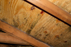 Mold growing on roof sheathing in Highland Park attic