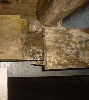 Extensive basement rot found in Winnetka by Dr. Energy Saver N.E. Illinois
