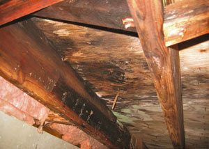 Extensive crawl space rot damage growing in Lincolnshire