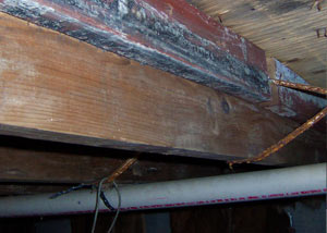 Rotting, decaying wood from mold damage in Buffalo Grove